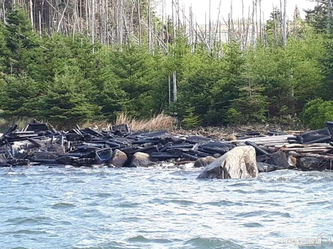 飓风多里安对加拿大的贝类养殖业造成严重损失