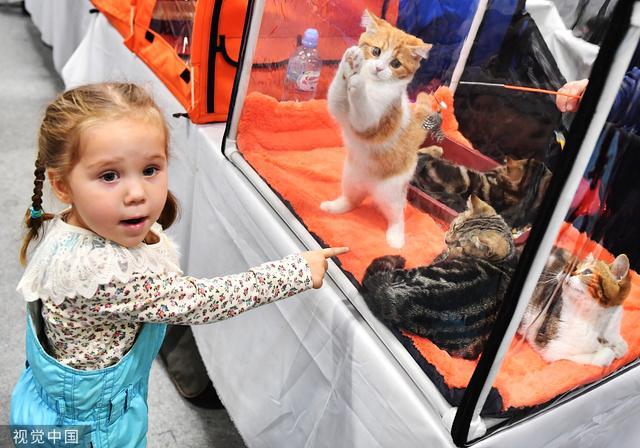 俄罗斯莫斯科举行猫展 吸引萌娃驻足