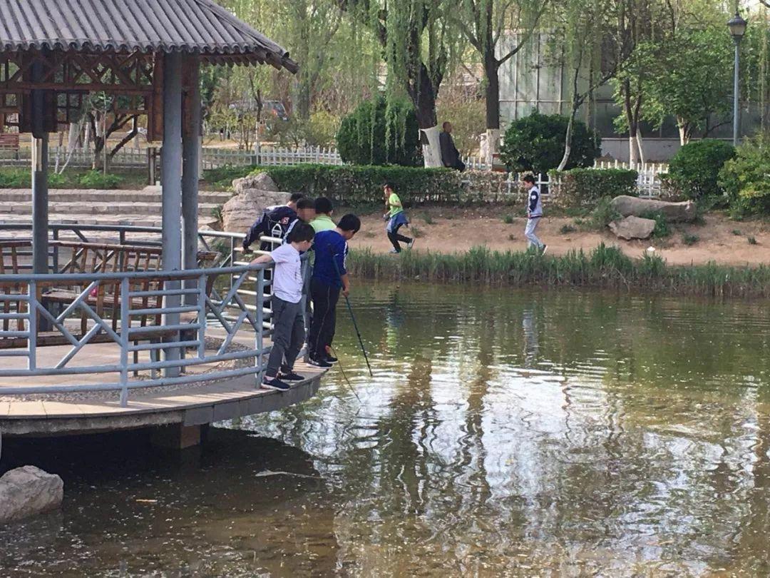 """天津这些公园的观赏鱼被他们""""下手""""……网友:你们是想晚上加个菜么?"""