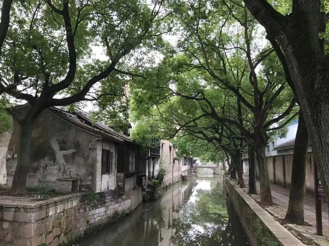 1张手绘地图,3条旅游路线,带你玩转浦东国字号特色小镇