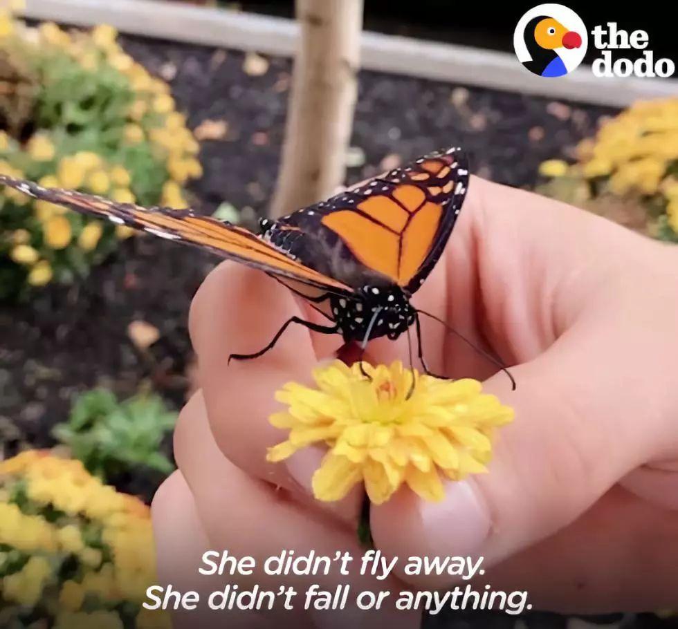 """男版""""香妃""""上演网友报恩,a网友电影感动电影:拍称蝴蝶了!任贤齐拍过的香港情节图片"""