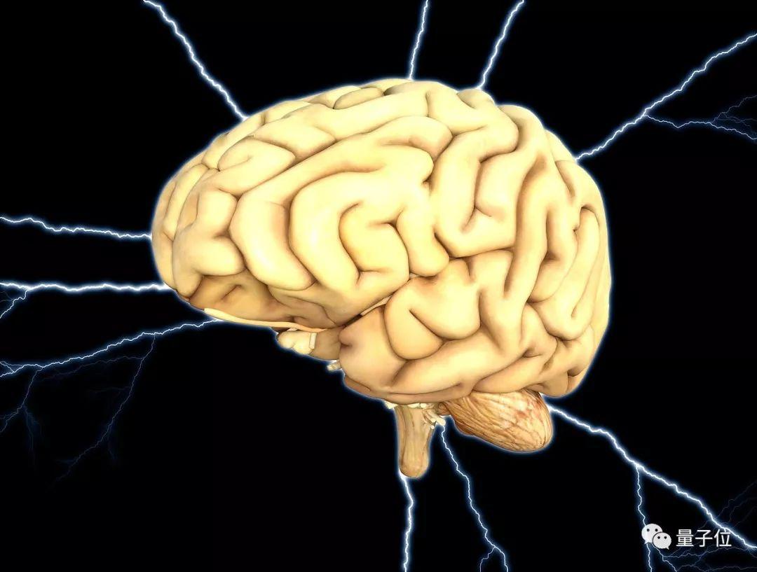 Nature封面引发持续热议,死亡猪脑恢复部分功能可实现永生?官方答疑来了