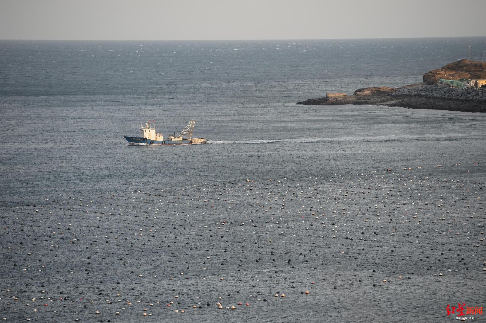 荣博彩票软 - 大连渔政部门:已就獐子岛涉嫌违规采捕展开调查