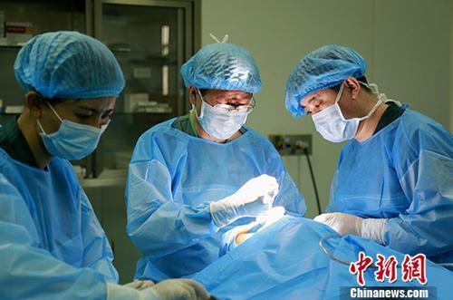 资料图:医生正在进行手术。中新社记者 张海雯 摄