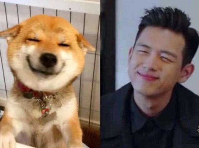 明星撞脸动物:林更新像二哈,看到岳云鹏笑出声