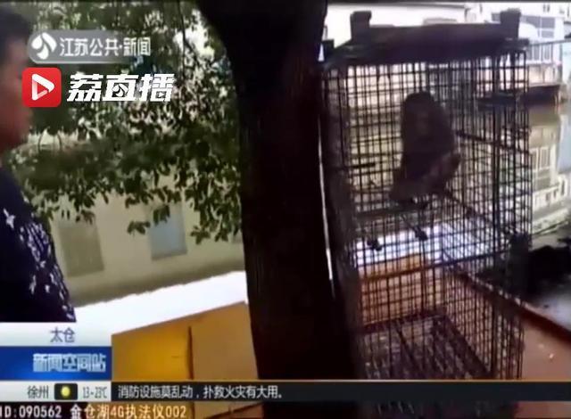 太仓一男子酒后买猕猴当宠物 养了两年才知犯法