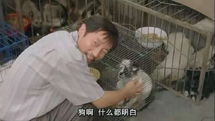 万人请辞杭州打狗:为什么动物保护永远充满争议