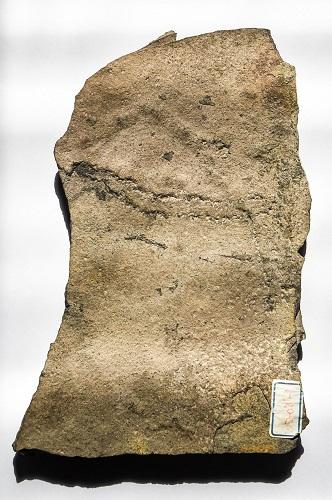 这是6月6日在中科院南京地质古生物研究所拍摄的在中国三峡地区发现的距今5.4亿多年前的动物足迹化石。新华社记者 李博 摄
