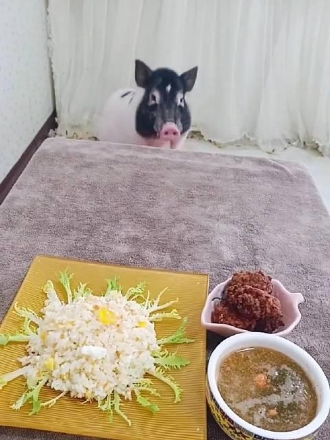娜娜家的捣蛋鬼:  扬州炒饭,蔬菜汁吃播 宅家宝藏技能