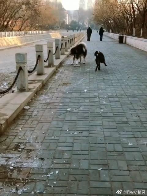 穷人家的狗子只能玩得起这个了……我觉得得给它报个滑板兴趣班