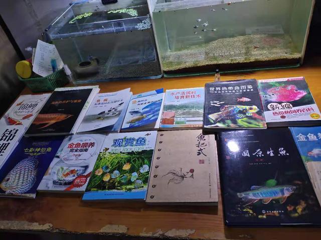 饲养观赏鱼,有以下的基本器材足够了,药物再多不如有本参考书