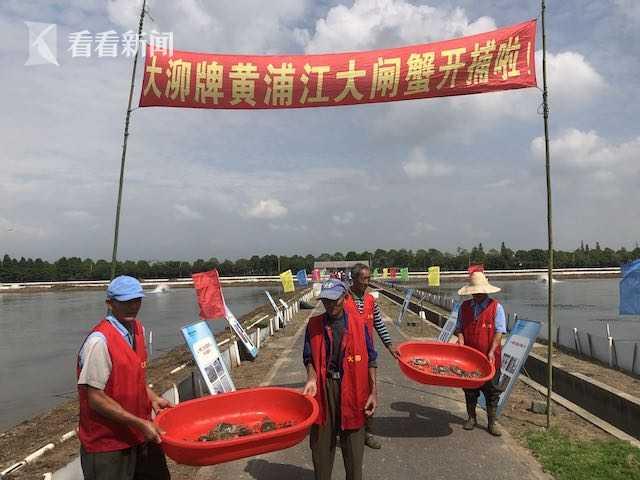 上海地产黄浦江大闸蟹开捕 第七代河蟹良种繁育超千亩