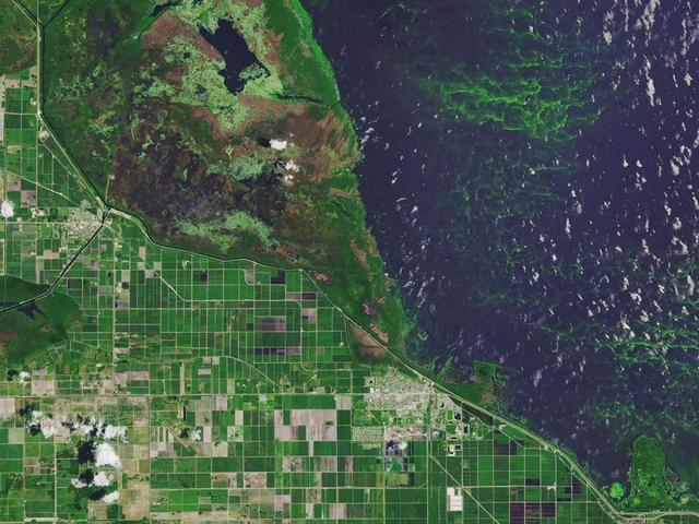 气候变暖远不止海平面上升这么简单,有毒藻类遇暖爆发或毒害人类