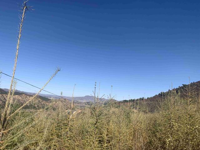 见证七十载 草原新发展 筑牢生态安全屏障 守护祖国绿水青山