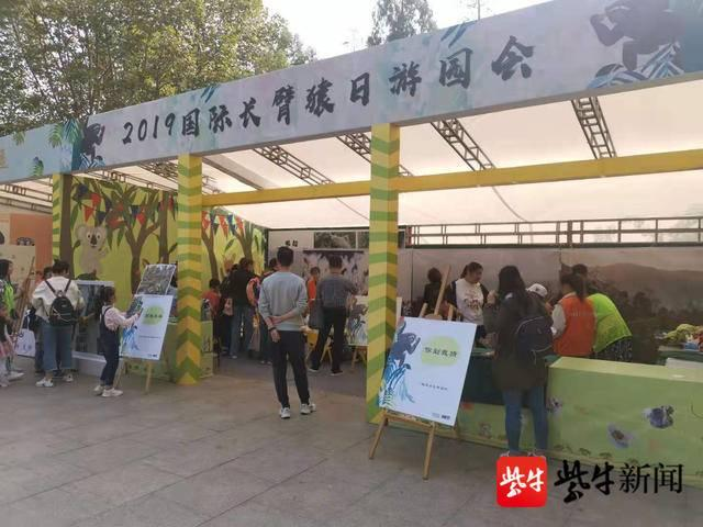全中国不足1500只,长臂猿比大熊猫更濒危 红山动物园与云山保护举办长臂猿科普游园会