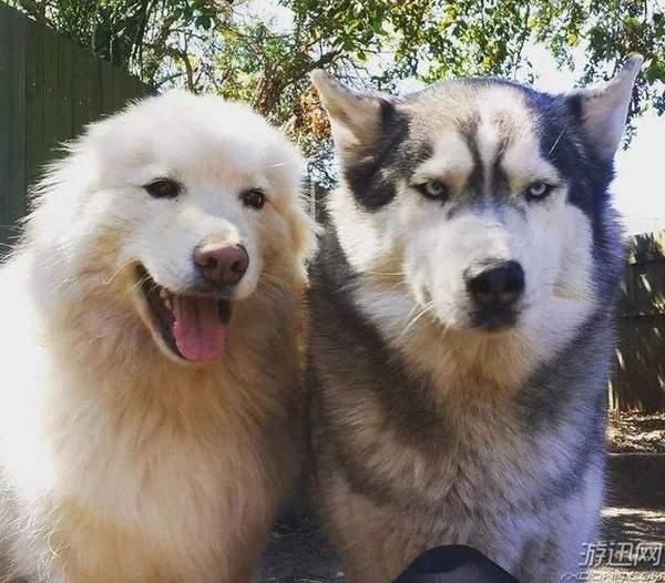 网友分享自家宠物的喜感瞬间 蠢萌可爱宛如行走表情包