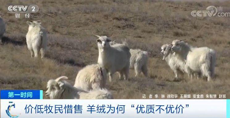 """鹿鼎娱乐体育 首届全国大学生""""轩辕杯""""短视频大赛落幕"""