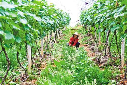 家庭农场�ylez)�9b$_家庭农场成致富亮点