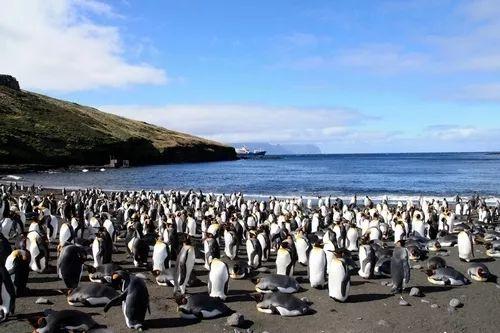 大洋洲小岛举行独立公投,马克龙称少了它法国不那么美丽