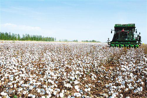 图片新闻:新疆库车县二八台镇阔什阿瓦提村棉田使用大型采棉机采摘棉花