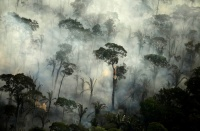 Fires in the Amazon: a barrier to climate change up in smoke亚马逊地区的火灾:防止气候变化的屏障
