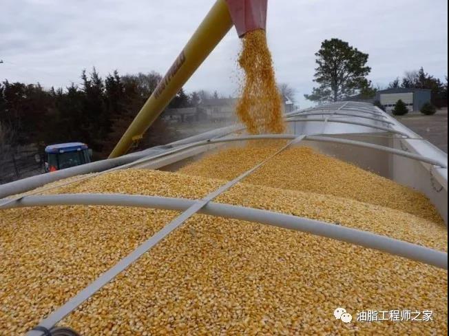 中国免除美国大豆和猪肉的关税