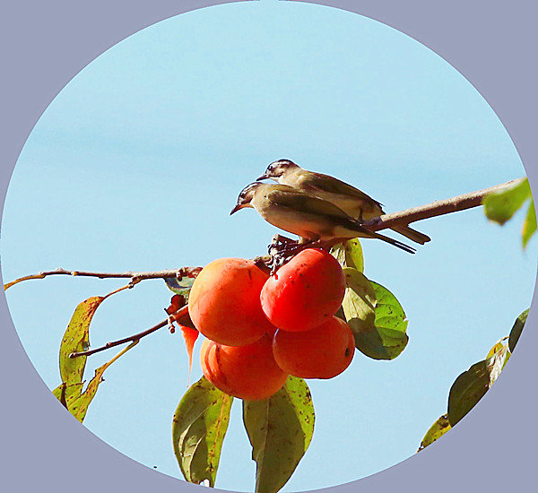 秋天的美食不止核桃山楂板栗柿子,还有秋分后的蝎子最肥美
