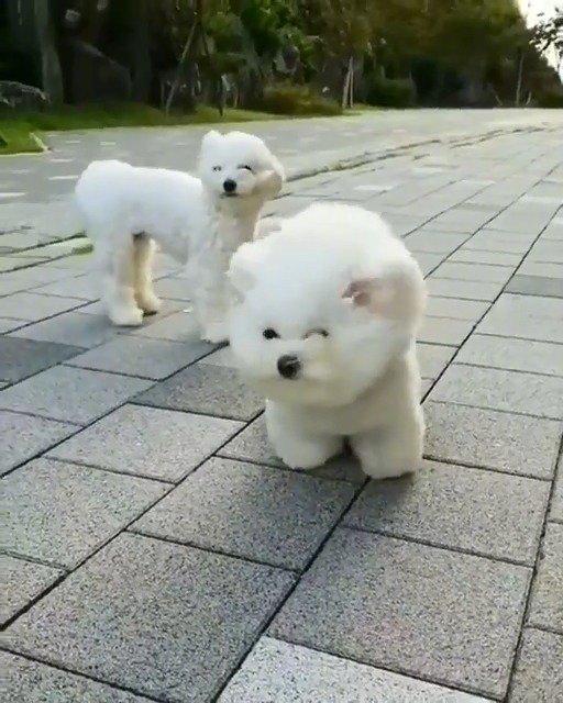 风中励志的狗子,狗子:我和我最后的倔强!
