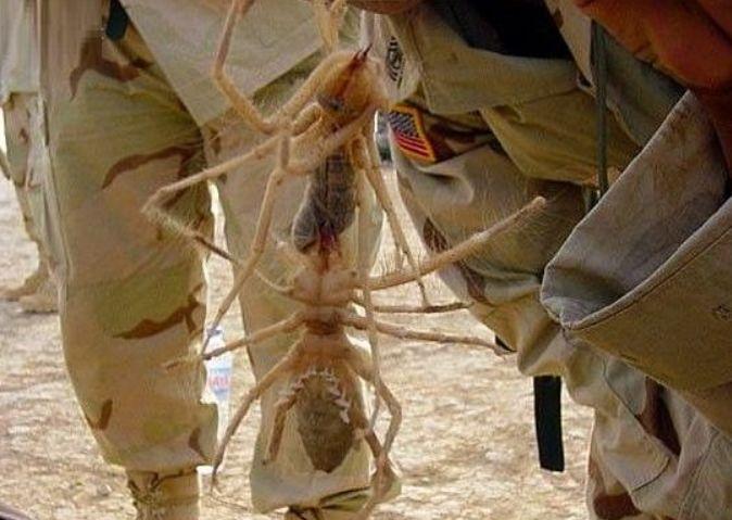男子在沙漠里发现巨型白蚁后,本想处理掉,专家却说是个宝贝