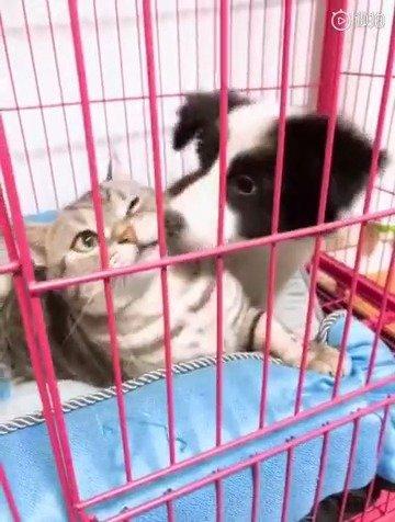 猫:小老弟你怕是没领略过铁头功吧