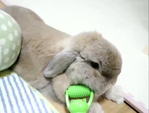 精致兔兔从每天的面部按摩开始
