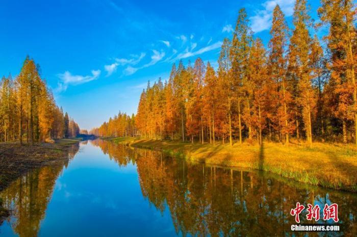 藍天碧水黃樹林。孫華金 攝