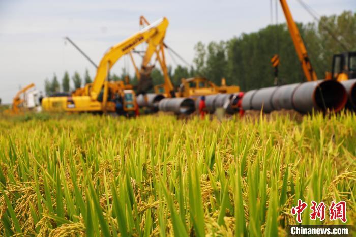 圖爲管線穿過稻田施工。 王鬆顯 攝