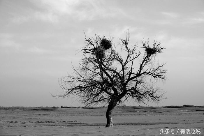 科尔沁沙地:我国最大沙地整好了 北京沙尘暴会再减少