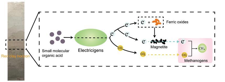 烟台海岸带所在湿地电微生物驱动产甲烷过程研究中取得进展