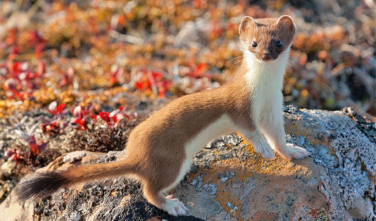 进博 | 北极熊、远东豹、猫头鹰……快来和俄罗斯的野生动物们打个招呼