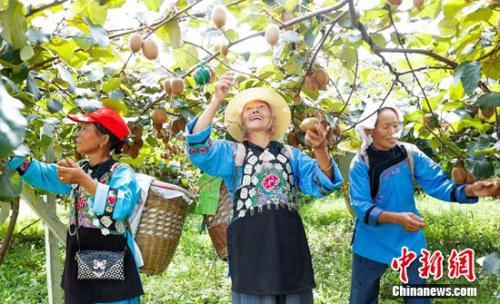 中国石化拓展创新消费扶贫 脱贫攻坚再出组合拳