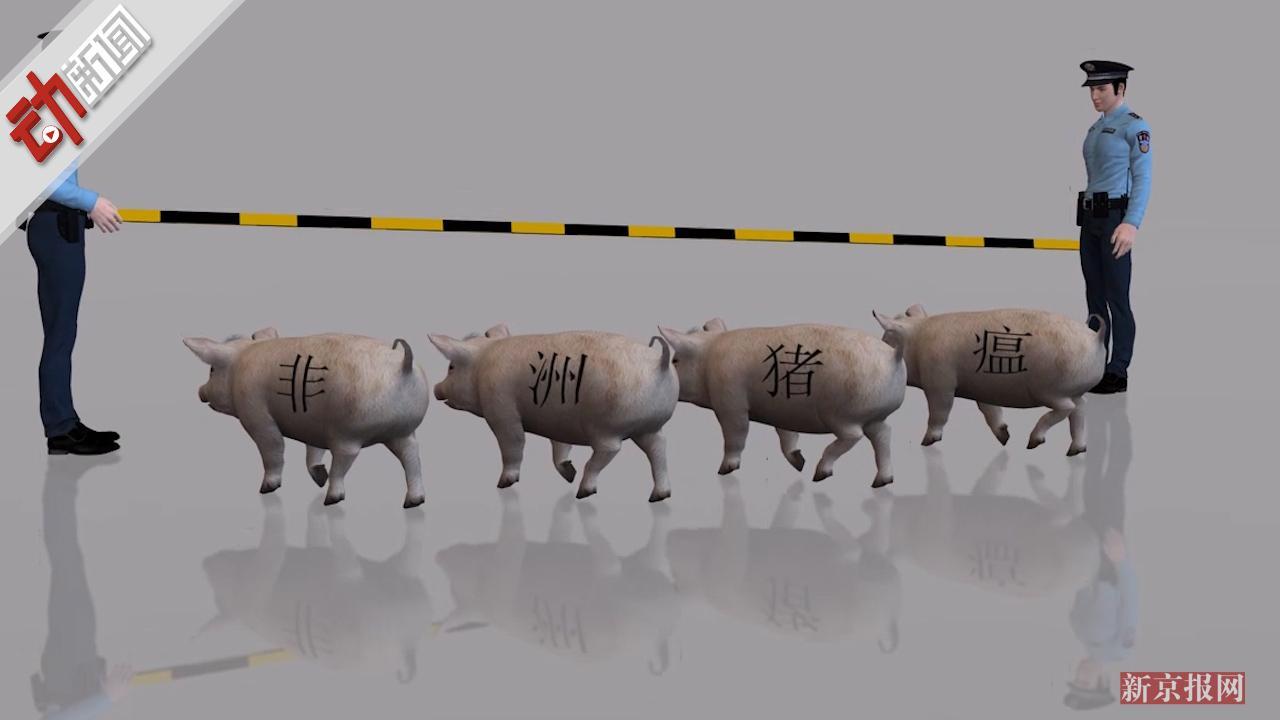 最新回应!农业农村部:非洲猪瘟不太可能变异传染人 3D揭如何防