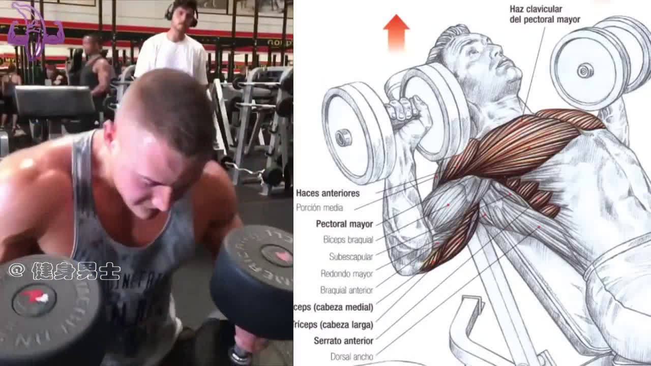 胸肌加肱三头肌训练动作示范和图解,让你明明白白的训练!