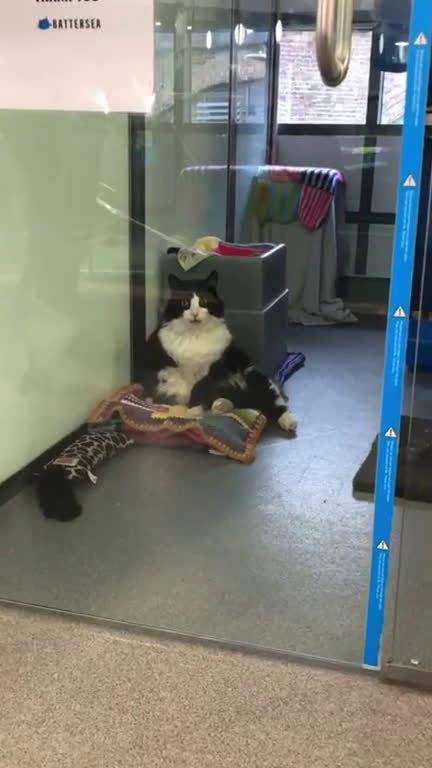 猫咪打了镇静剂,一脸迷茫地看着外面...