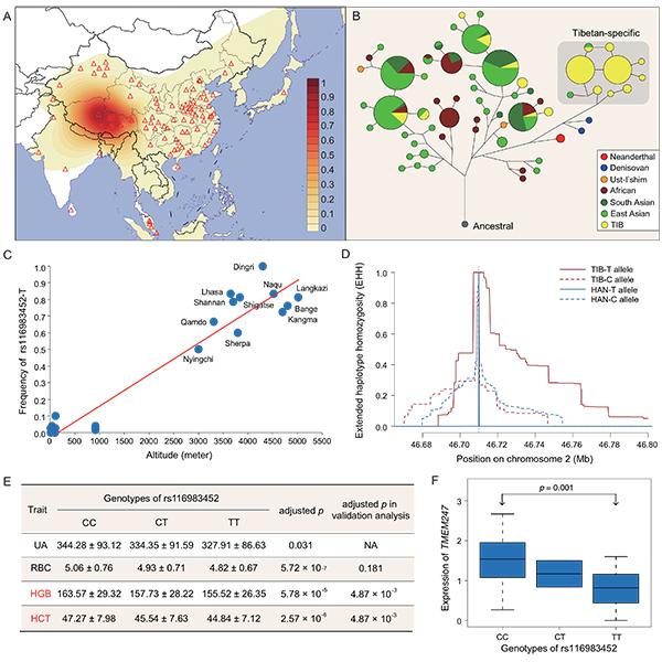 科学家构建藏族人群全基因组水平的适应性遗传变异图谱
