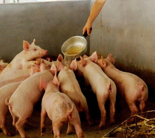 甘肃省岷县发生非洲猪瘟疫情,已采取扑杀等措施