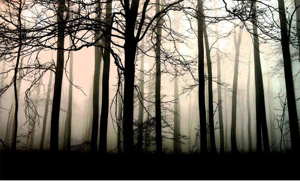 黑白森林:我在债券私募的2000天