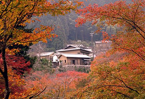 資料圖:日本京都民居在紅葉的掩映下顯得幽靜宜人。(新華社)