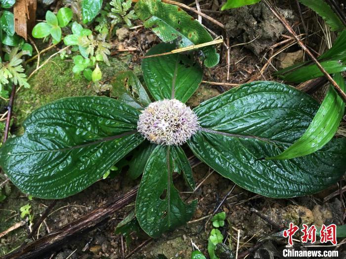 http://www.gyw007.com/jiankangbaoyang/385899.html