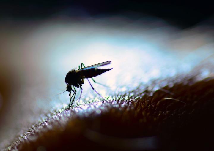 """用""""转基因蚊子""""灭蚊不管用了?专家称:还可能产生超级蚊子"""