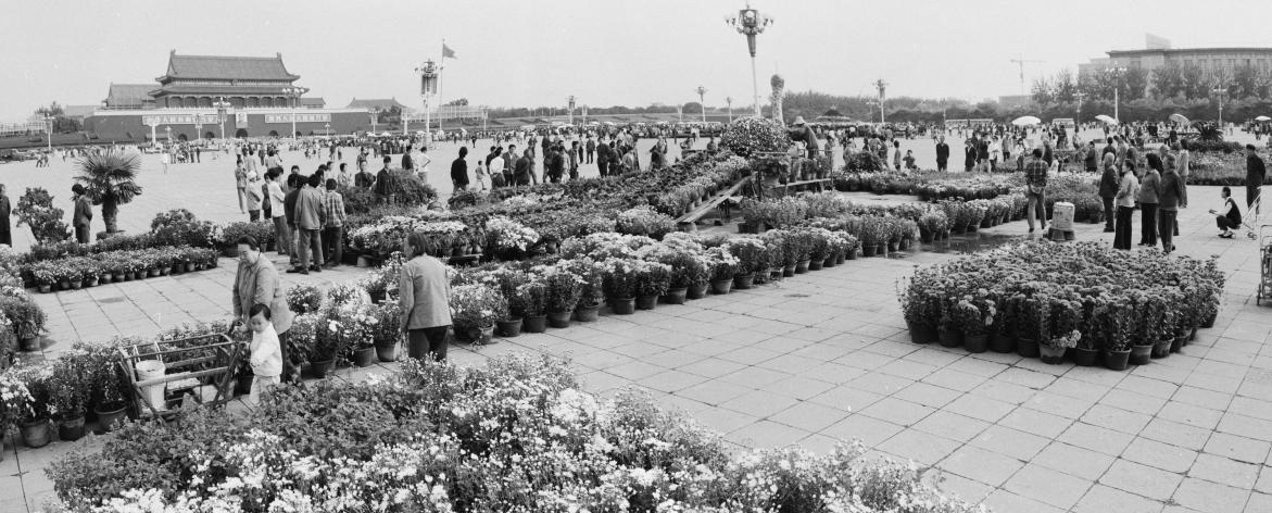 """1986年,国庆节前夜,园林工人正在天安门广场安插""""孔雀开屏""""花坛。王振平易近/摄"""