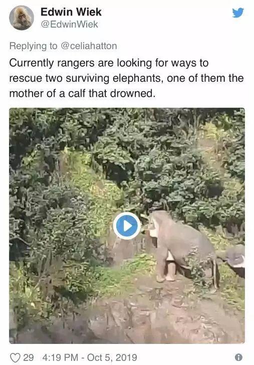 泰国小象跌落瀑布 5头大象为救它也跌落死亡