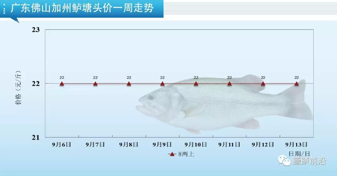 加州鲈:广东新鱼涨1.5元,四川涨1元!
