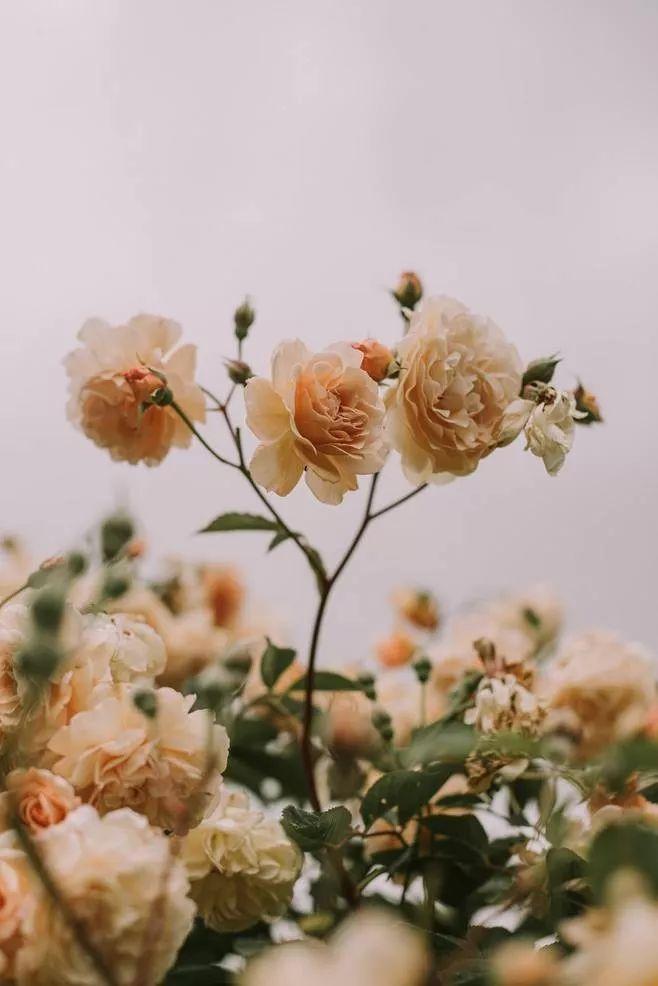 用加法爱人,用减法怨恨,用乘法感恩,用除法解忧